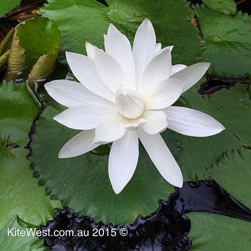 Retreat-Bali-Water-Lely
